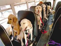 OMG! they are all going to school!!! I want to be the bus driver!