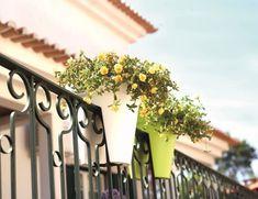 Marta Malheiro, Author at Revista Jardins - Página 2 de 2 Graphic Design, Plants, Capri, Drawings, Language Of Flowers, Tropical Plants, Warm Colors, Window Boxes, Garden