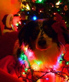 Lilly is pretty festive.