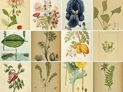 """""""THE BIODIVERSITY LIBRARY on Flickr has more than 76,000 high quality scans of old nature illustrations: botanicals, birds, insects, marine life...all old and gorgeous. They are marked as free  to download and use for non-commercial purposes. Great for nature study or printing out as art for  your walls!"""" From Heather Leonard via Homeschool Freebies."""