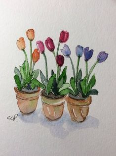 Potted Tulips Watercolor Card / Hand Painted Watercolor Card Flowers that will last! This card is an original watercolor not a print. It would look lovely framed. This card is painted on heavy card stock. I have used watercolor and ink. The card is 5x7 and in portrait. Comes with a #watercolorarts
