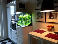 Aquascape in a kitchen. Pretty well managed
