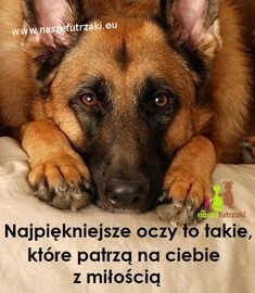 Best Dog Photos, True Feelings, Save Life, Romantic Quotes, True Stories, Good To Know, Best Dogs, Cute, Animals