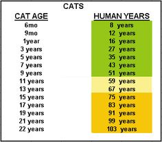 Cat Age Chart Years How Old Is Your Pet In People Ages