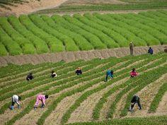 Sus cuadros revelan las dificultades de los ciudadanos de Corea del Norte.