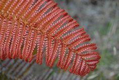 Where the Red Fern Grows - free 2 week Project Based Learning (PBL) covering ELA ccss. Grades 4, 5, 6, 7