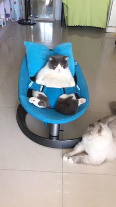 Cats Doing Funny Things, Funny Cute Cats, Cute Cat Gif, Cute Funny Animals, Cute Baby Animals, Puppies And Kitties, Baby Puppies, Cute Cats And Kittens, Kittens Cutest