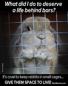 No bunny deserves to be kept in a small cage!