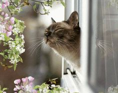 Even he can and smell the beauty and freshness of the morning. WONDERFUL!