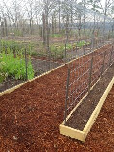 wire to create this rounded trellis for zucchini, tomatoes, and bean.