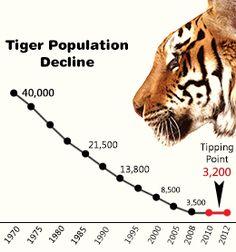 Tiger population decline