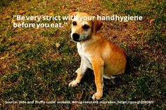 cool #quote Fido and Fluffy could unleash #drug-resistant microbes