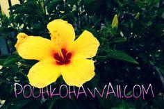 Please LIKE us on our FB fan page. フェースブックのファンページもLIKEボタンを押してね♬http://www.facebook.com/poohkohawaii#ハワイ