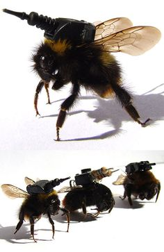 creepy weaponized insects unveiled