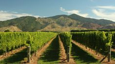 Because wine. One of 26 reasons why Air New Zealand flies to 25 destinations in NZ. Check out the full list now.