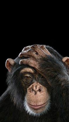 Monkey wallpaper by mirapav - 62 - Free on ZEDGE™ Primates, Mammals, Beautiful Creatures, Animals Beautiful, Animals And Pets, Baby Animals, Strange Animals, Exotic Animals, Exotic Pets