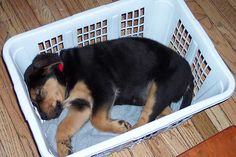 """15 Signs Your Dog Might Actually Your """"Baby"""""""