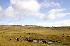 Pampa, Argentina#La Pampa commence aux portes sud de Buenos Aires. Cette immense plaine est le pays des gauchos, les cow-boys argentins. Terre d'élevage sous des cieux à n'en plus finir, la Pampa contient de nombreuses estancias, des ranchs dont certains sont ouverts au public. C'est d'ici que vient le fantastique bœuf argentin. #http://urlz.fr/3g9L#LifeThroughMyLensdotorg#3,18,12