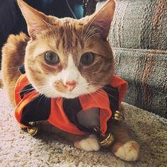 Pin for Later: 65 Pet Costumes to DIY on the Cheap Jester