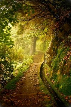 Forest Trail, Plitvice, Croatia.