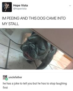 """33 Hilarious Memes To Help You Forget That It's The Worst Day Of The Week - Funny memes that """"GET IT"""" and want you to too. Get the latest funniest memes and keep up what is going on in the meme-o-sphere. Funny Animal Photos, Funny Animal Memes, Dog Memes, Cute Funny Animals, Stupid Funny Memes, Funny Relatable Memes, Funny Cute, Funny Images, Funny Dogs"""