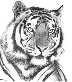 Tatuajes De Manga Arte Tatuaje Tigre Proyectos Carpinteria Tigres Ideas Leones Dibujo