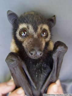 bats, who says this guys are ugly?