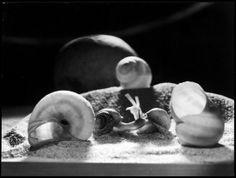 SWITZERLAND. 1942. Zurich. Snails by Werner Bischof