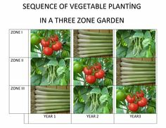Diversification of crop in a garden of three zones is suggested to reduce risk of plant diseases and reduction of yield.