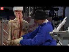 Anatomia dla poczatkujacych 01 Ruch - YouTube