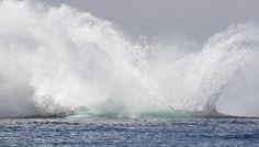 O mergulho da baleia jubarte