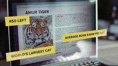 WWF Tiger Challenge #Run4Tiger