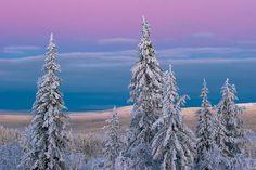 Ylläs-Pallas Nationalpark, Finnish Lapland