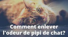 Odeur de pipi de chat, voici 10 astuces pour éliminer la mauvaise odeur de pipi de chat dans la maison.