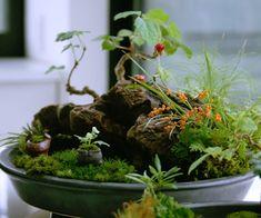 豊穰の里山の苔盆景3