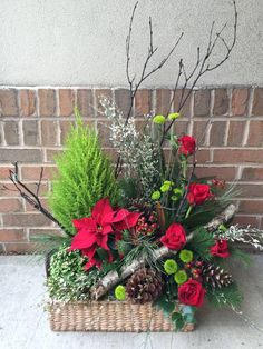 Rustic Christmas basket with birch and live plants.