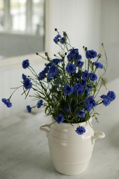 Fab blue flowers in a crock  (bachelor buttons?)