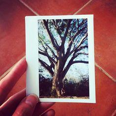An Instagram of a Polaroid with @Darsan O'Connor under a giant tree #eidon #eidonsurf #nica2013 #nicaragua #instagood #tree #sky #picoftheday #instashot #instalight #livetravelsurf #polaroid by @bruneblonde