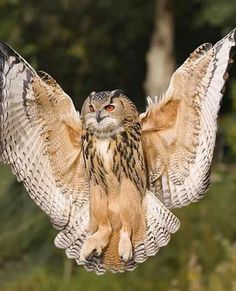 Eurasian Eagle Owl  Fine Art Photographic Print  Stunning Sharp