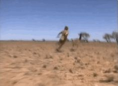 The time he chased AND CAUGHT an emu! | 21 Reasons Why Crocodile Hunter Steve Irwin Will Never Be Forgotten