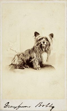 Greyfriars Bobby is famous as the faithful dog who would not desert his master even at his death, and spent the rest of his life living in Greyfriars' Churchyard in Edinburgh.
