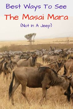 Want to discover the amazing Masai Mara National Park? Check out these alternatives for a jeep free safari http://wp.me/p8lh3N-4W | Kenya | Hot Air Balloon | Maasai People | Great Migration | Travel Tips