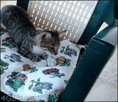 Tumblr: catsdogsblog:    More GIFs http://catsdogsblog.com/