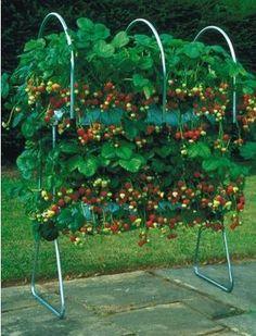 Aquaponics System For You - – Ma fraiseraie Fruit Garden, Edible Garden, Herb Garden, Balcony Garden, Garden Stand, Vegetable Garden Design, Grow Organic, Aquaponics System, Permaculture