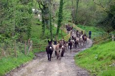 The donkeys can't wait to get out into their Summer paddocks after the long winter - here they're pictured on our beautiful Paccombe Farm as they galloped the 1 mile to their hillside field. They were so excited, kicking up their heels as they arrived. Baby Cows, Baby Elephants, Strongest Animal, Farm Holidays, Rodeo Cowboys, Cute Baby Animals, Wild Animals, Animal Magic, Indian Elephant