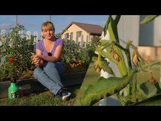 De ce se usuca florile la rosii ? - YouTube Youtube, Plant, Youtubers, Youtube Movies