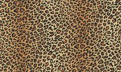Fierce Amber (618200) - Arthouse Wallpapers - A fun all over animal print design showing leopard spots. Shown here in cream and brown spots with black detailing. Other colourways are available. Please request a sample for a true colour match.