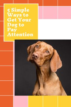 5 Simple Ways to Get Your Dog to Pay Attention Brain Training, Training Your Dog, Positive Reinforcement, Dog Runs, Pay Attention, Simple Way, Animals And Pets, Dog Breeds, You Got This