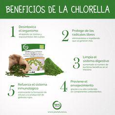 Beneficios del alga #Chlorella para nuestro cuerpo. #superalimento