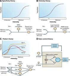 Theories of pain: from specificity to gate control | Journal of Neurophysiology